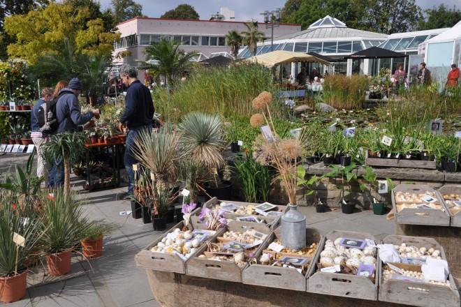Foto: Pflanzenraritätenmarkt im Grugapark Essen