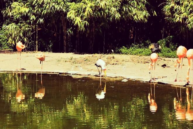 Flamingos im Grugapark Essen