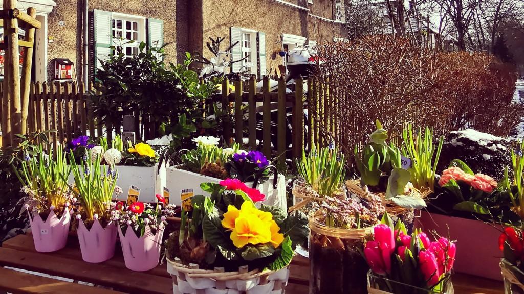 Frühlingsvorboten