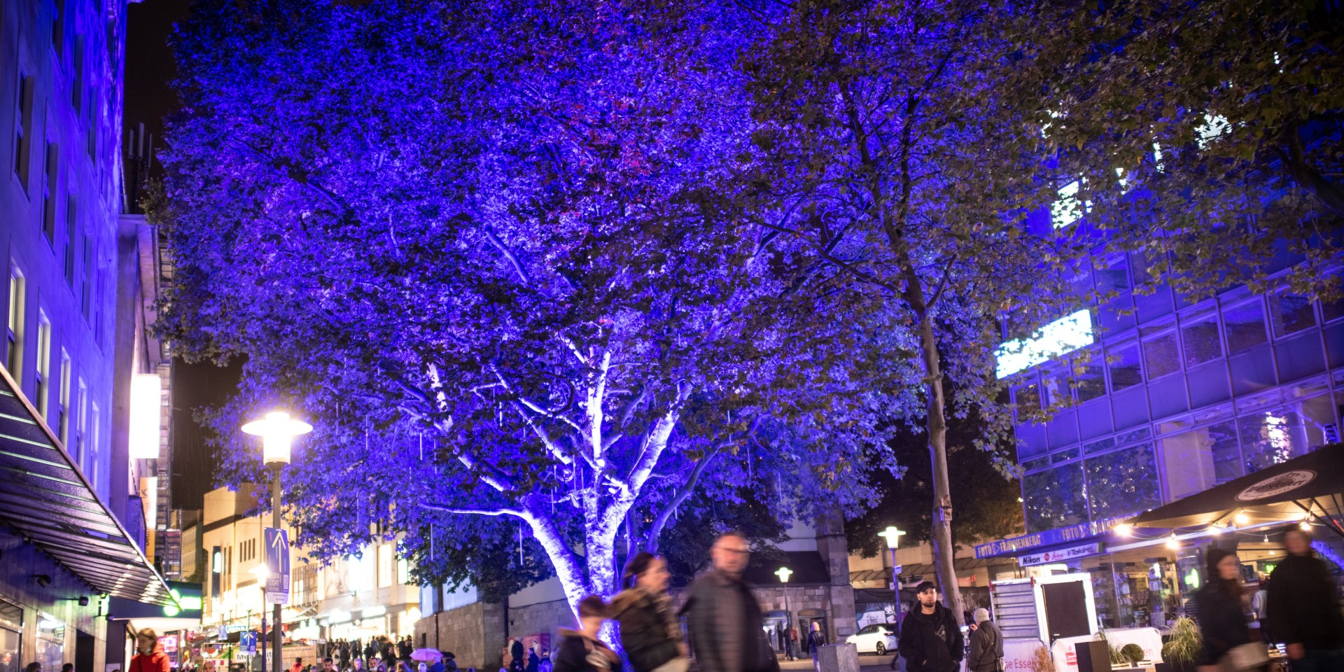#6 Baum der Wünsche