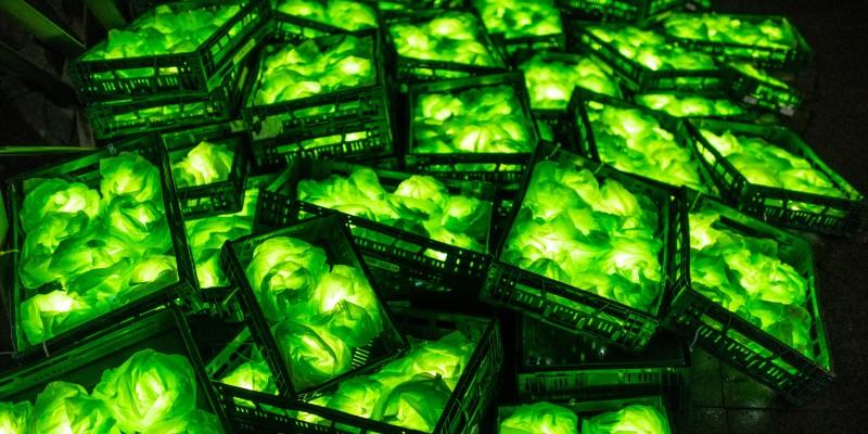 Green Marvelous Opulence