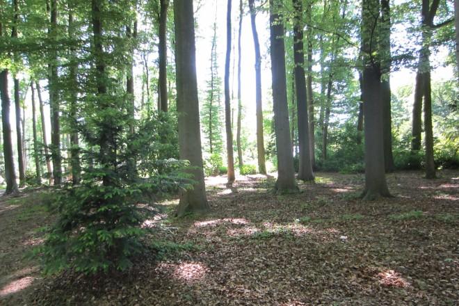 Foto: bewaldeter Bereich auf dem Friedhof Kettwig