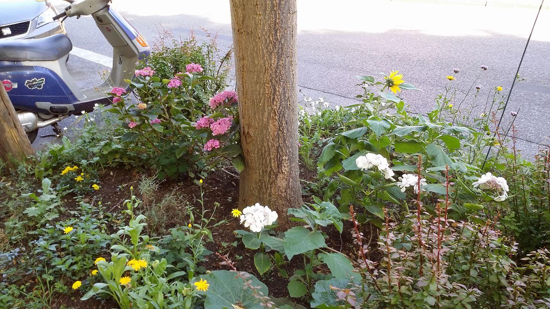 Frisch bepflanztes Blumenbeet in Frohnhausen