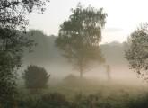 Foto: Nebellandschaft mit Bäumen