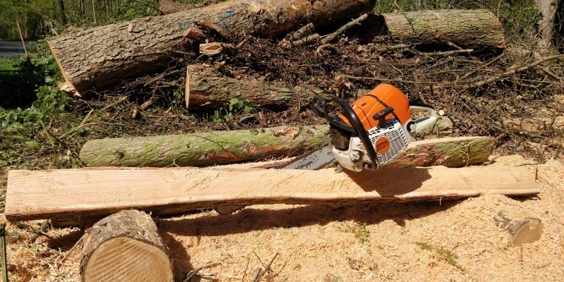 Eine Kettensäge liegt auf einem zersägten Baumstamm