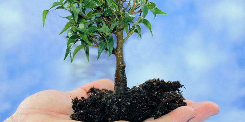 Foto: geöffnete Hand hält Baumsetzling