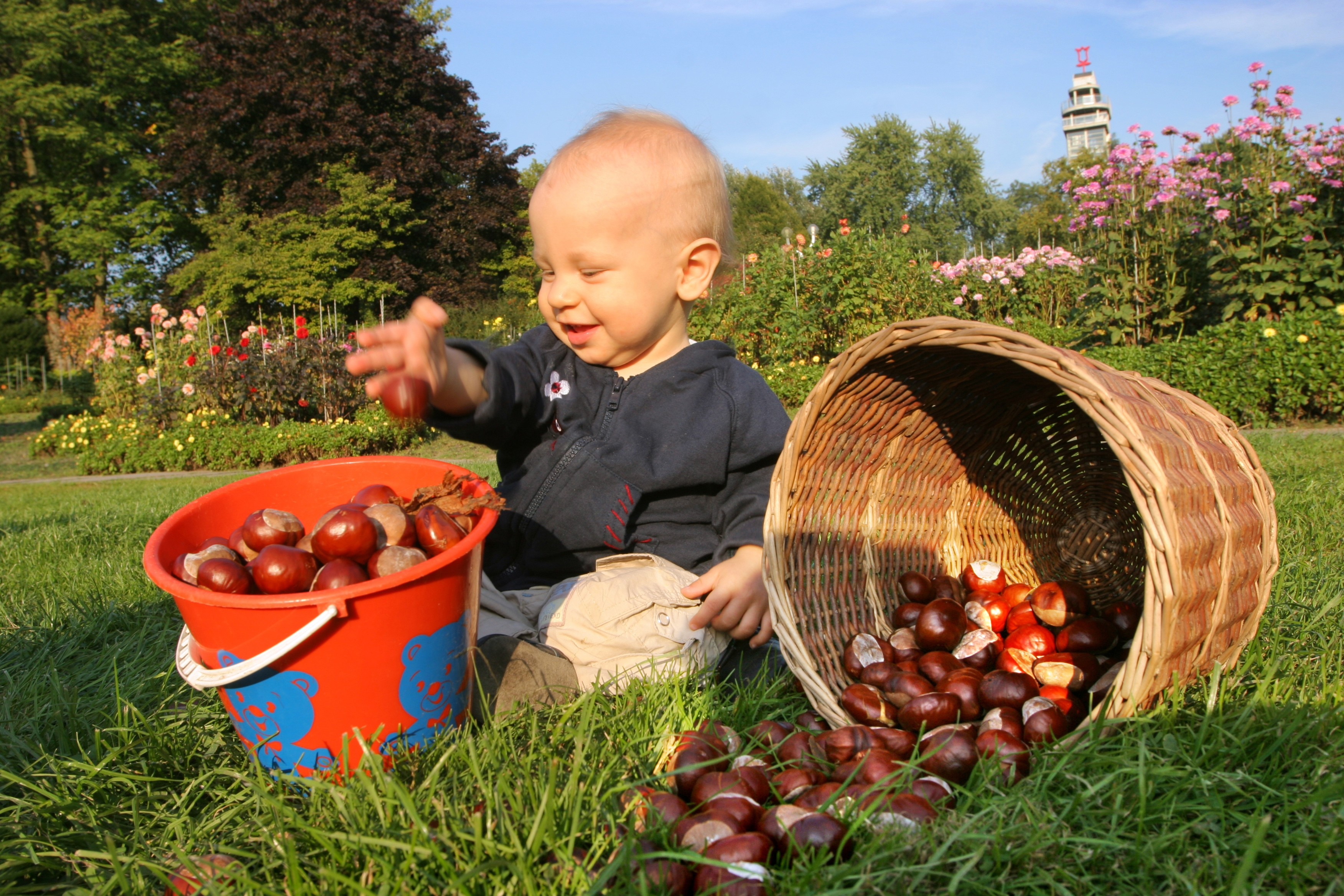 Kind auf einer Wiese mit Kastanien in einem Korb und Eimer