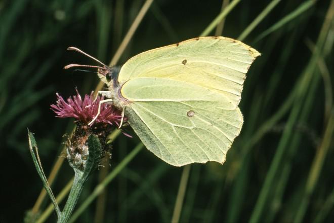 Foto: Schmetterling auf einer Blume