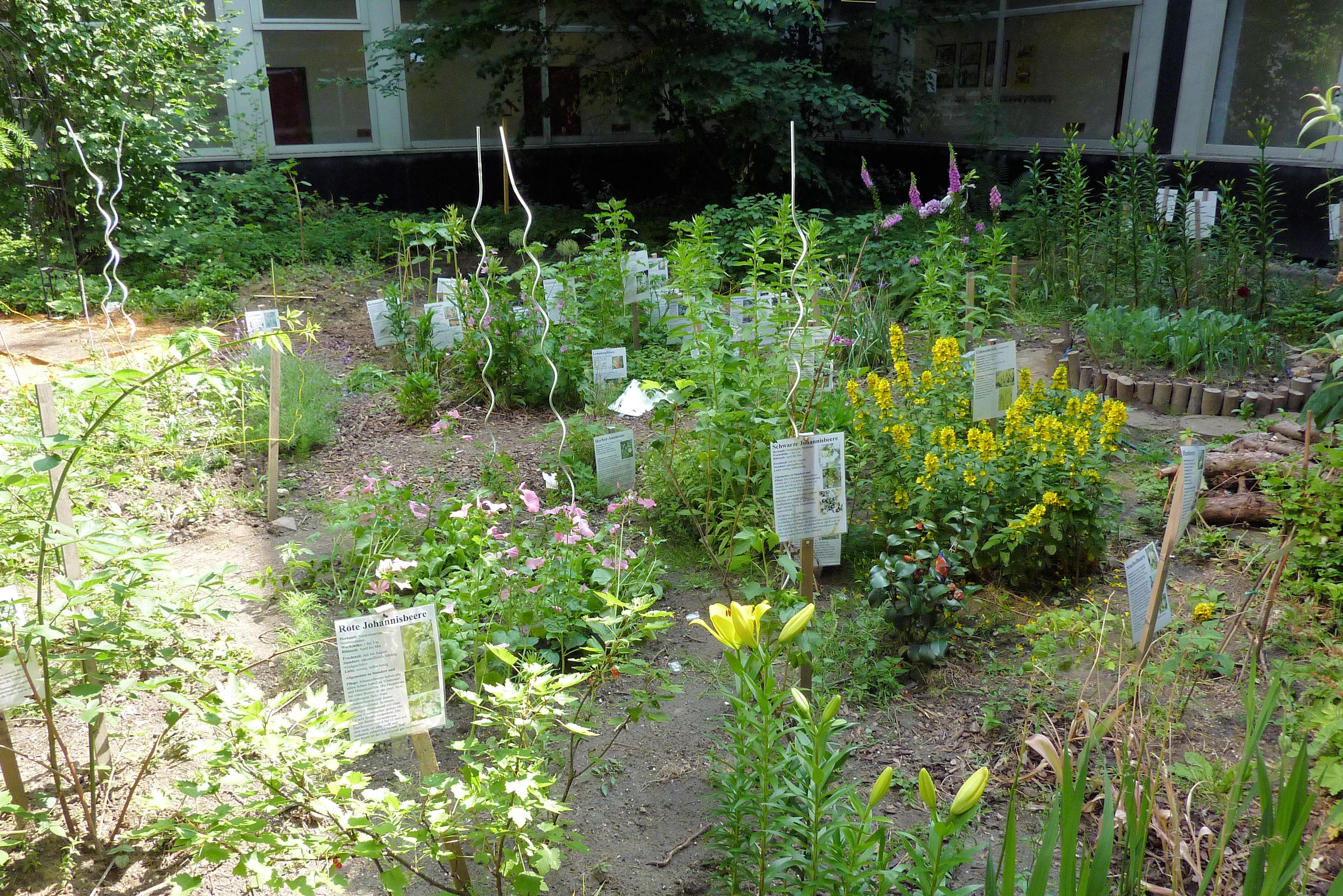 Teilansicht eines Gartens mit Pflanzenund Wegen