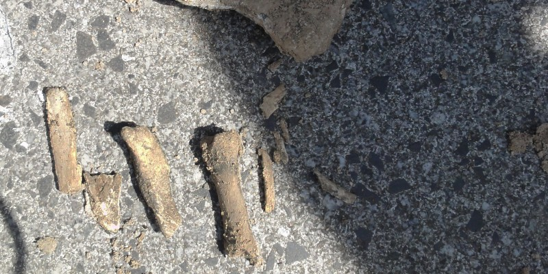 Foto: Sandstein und Knochenfunde aus einem Bohrloch