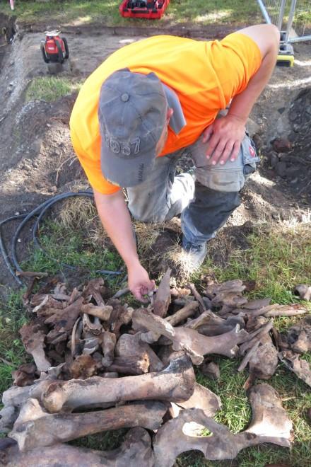 Foto: Ein großer Teil der Knochen ging zwar verloren, doch konnten viele noch geborgen werden