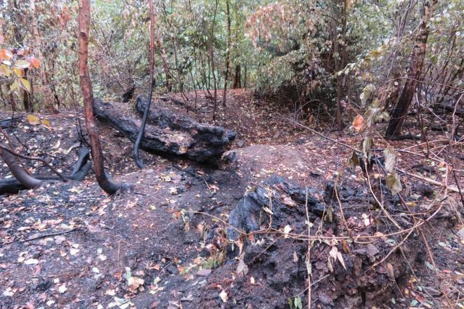 Foto: Brandspuren im Bereich der Wälle der Hauptburg