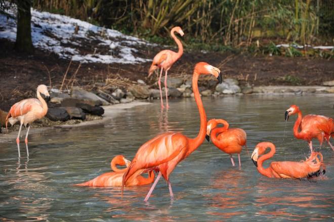 Flamingos in der Vogelfreifluganlage im Grugapark