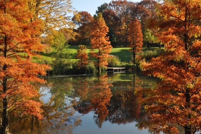 Waldsee im Grugapark im Herbst