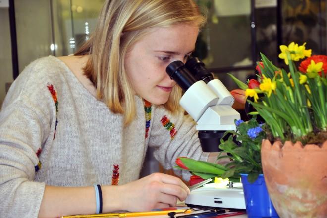Mikroskopieren bei der Schule Natur