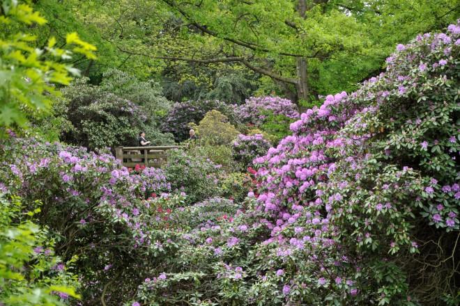 Rhododendrontal des Grugaparks