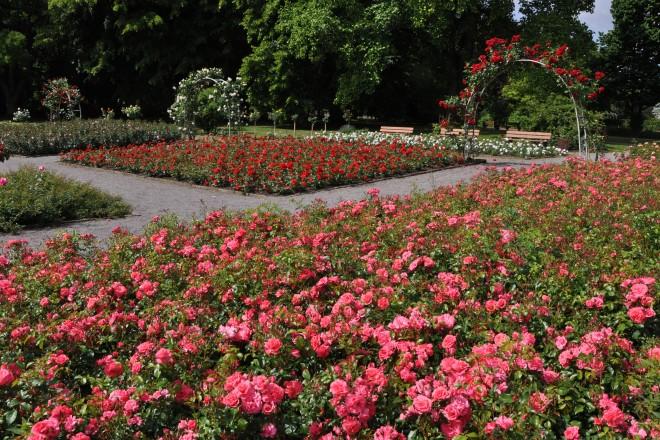 Rosengarten im Grugapark