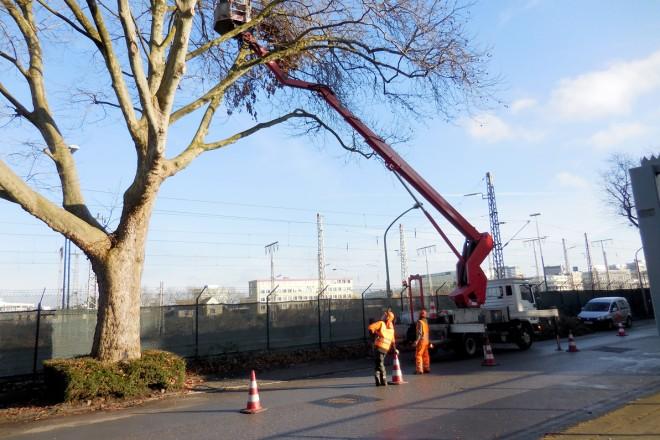 Baumarbeiten mit Hubsteiger
