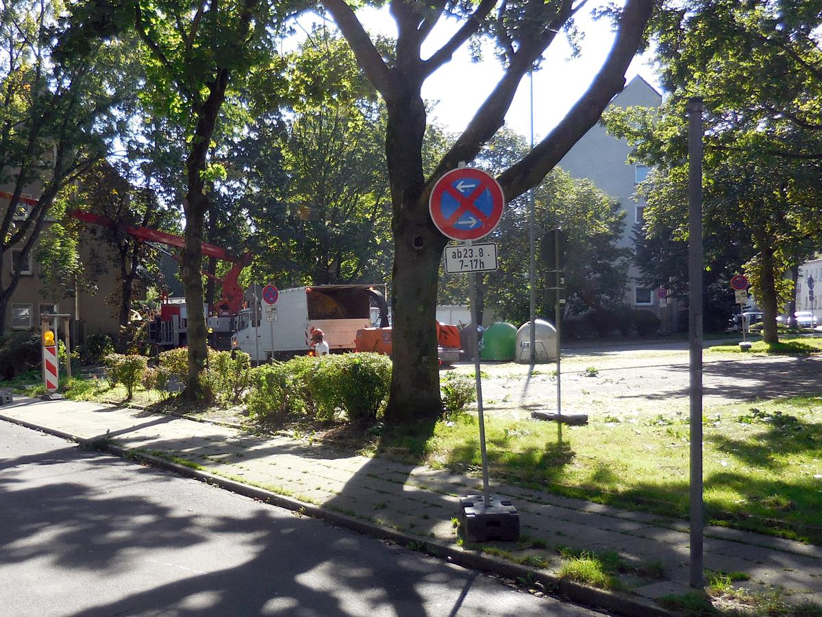 Halteverbot bei Baumpflegearbeiten im Straßenraum