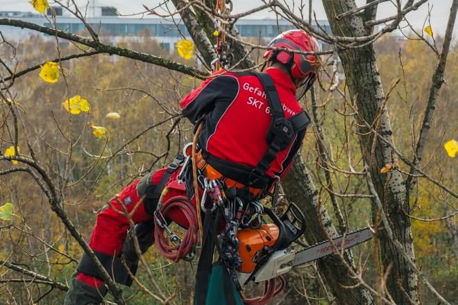 Einsatz der Seilklettertechnik bei Baumpflegearbeiten im StraßenraumBaumpflegearbeiten im Straßenraum