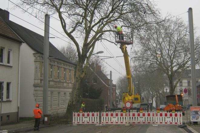 Baumpflegearbeiten in der Nähe von Oberleitungen der Straßenbahn