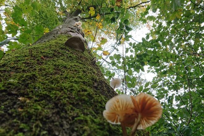 Habitatbaum mit Pilzbesiedelung