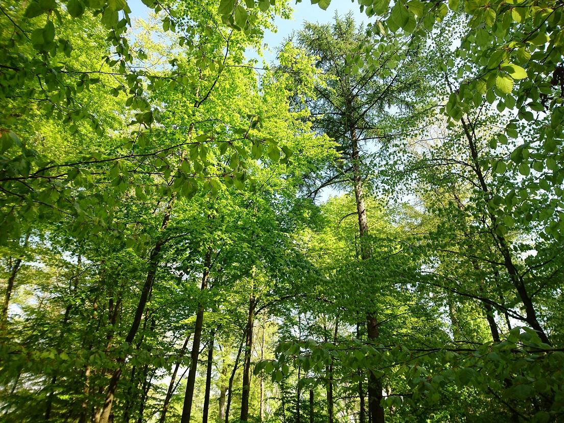 Mischwald aus mehreren Baumarten