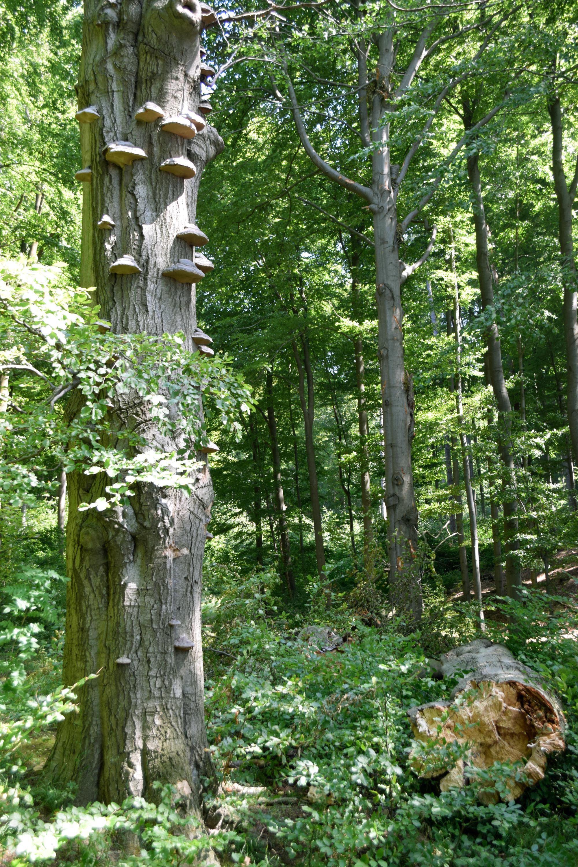 Totholz im Wald