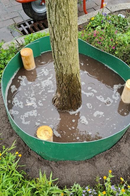 Gießmanschette an einen gerade gepflanzten Baum