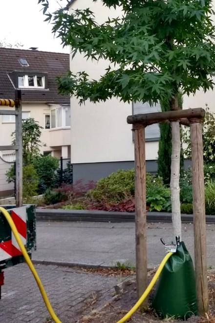 Bewässerung eines jungen Baumes mit dem Treegator-Bewässerungssystem