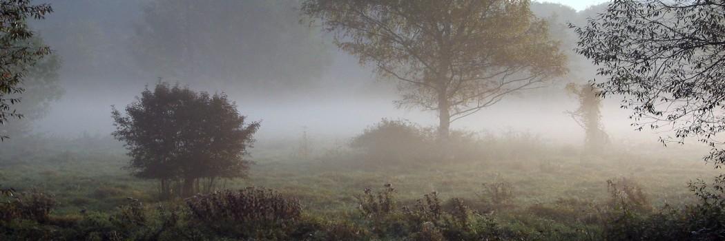 Foto: Wiese mit Nebel