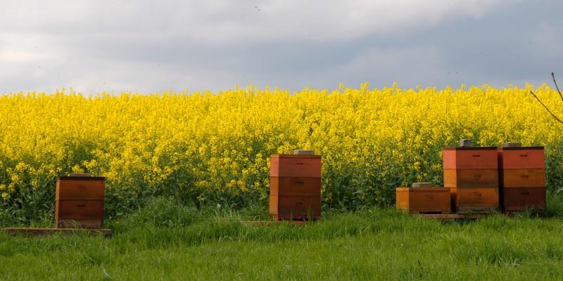 Foto: Bienenstöcke