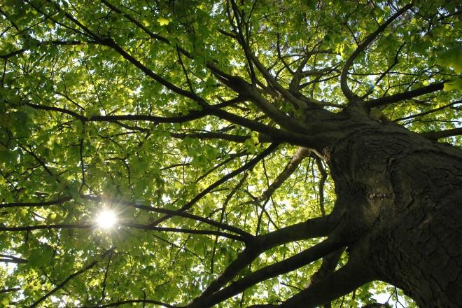 Foto: Ein Baum aus der Froschperspektive
