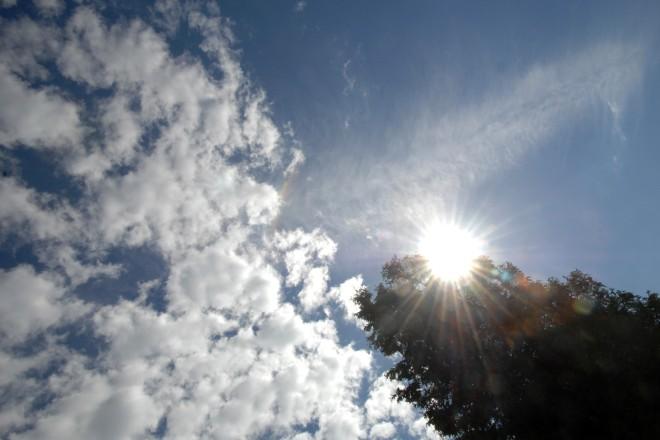 Foto: Sonne die durch eine Baumkrone scheint