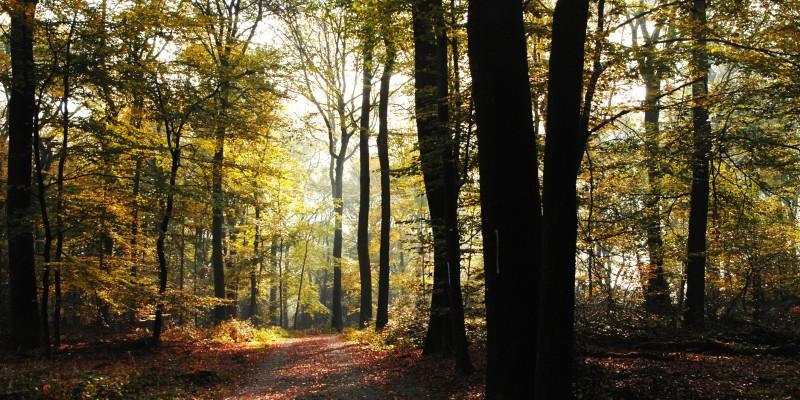 Foto: Schellenberger Wald