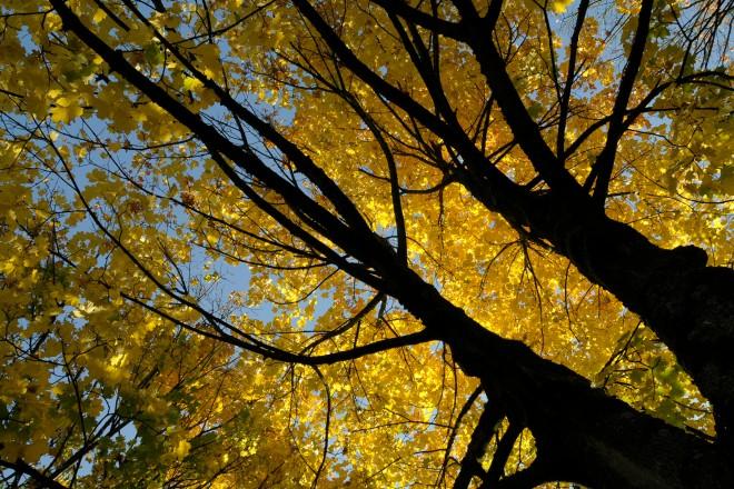 Foto: Baum im Herbst