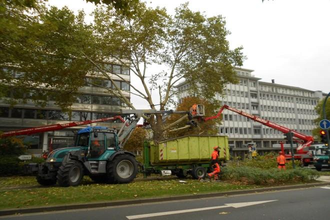 Im Oktober 2018 musste in der Huyssenallee ein Risikobaum gefällt werden.