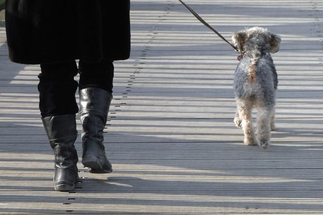Foto: Hund beim Gassi gehen