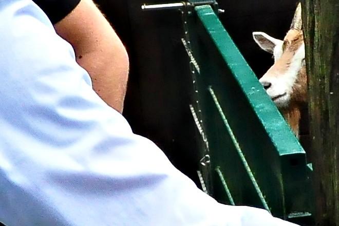 Foto: Oberbürgermeister Thomas Kufen besucht das Tiergehege Wichteltal