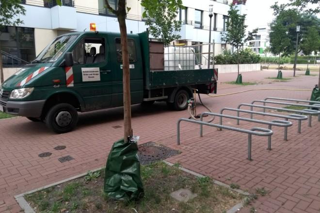Treegator-Bewässerungssystem für junge Straßenbäum