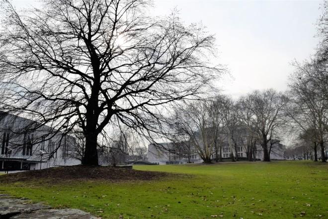 """Am Sonntag findet der erste Stadtspaziergang im Rahmen des Projektes """"BaumAdapt"""" statt."""