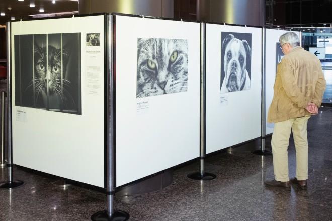"""Foto: """"Blick in die Seele"""": Ausstellung noch bis 25. Oktober im Rathaus-Foyer"""