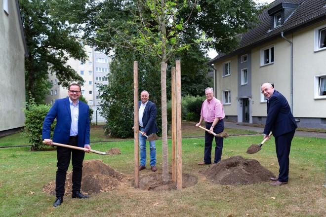 """Pflanzung """" Baum des Jahres """" der Allbau GmbH v.l.n.r: Oberbürgermeister Thomas Kufen, Allbau-AR-Vorsitzender Thomas Rotter, der stellv. Allbau-AR-Vorsitzende Uwe Kutzner und derAllbau-Geschäftsführer Dirk Miklikowski"""