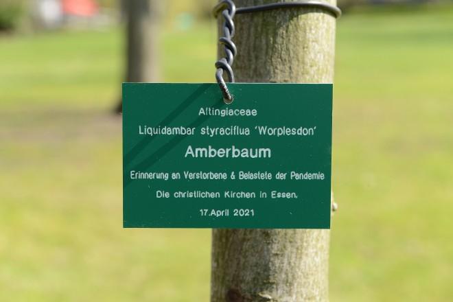 Foto: Plakette am gepflanzten Amberbaum.