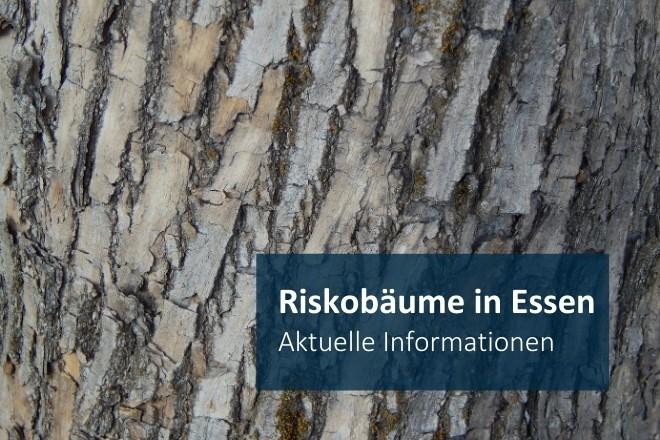Grafik: Risikobäume in Essen: aktuelle Informationen
