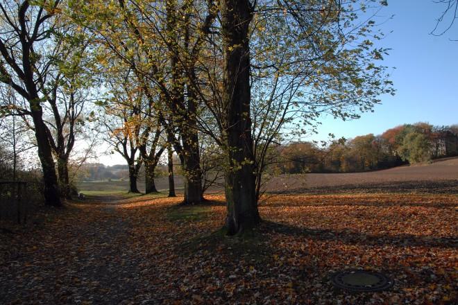 Landschaft in Essen- Heidhausen. Blick von der Barkhovenallee.