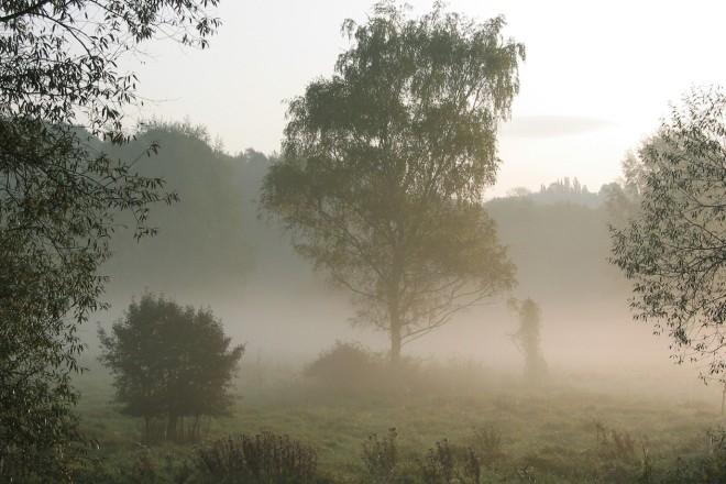 Nebel in der Heisinger Aue.