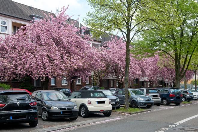 Frühling an der Moltkestraße