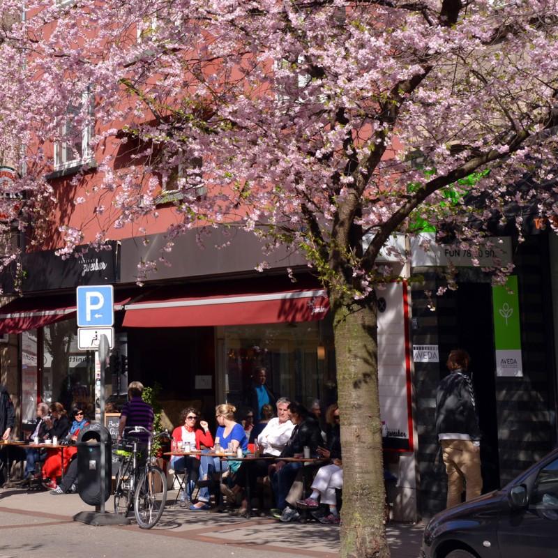 Kirschblüte auf der Rüttenscheider Straße