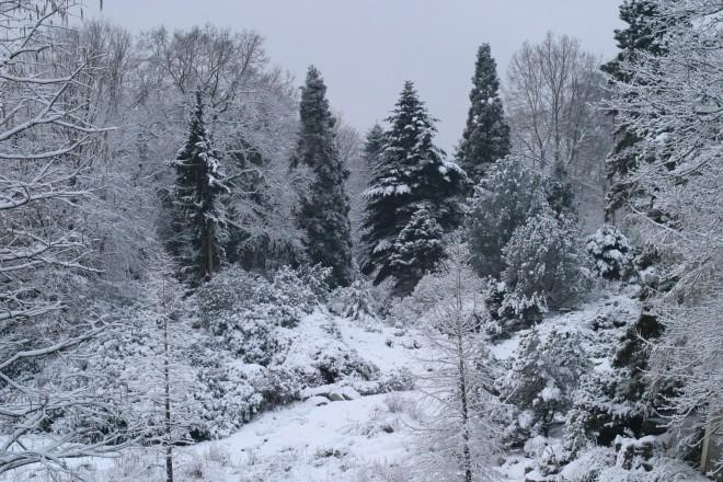 Koniferenteil im Winter